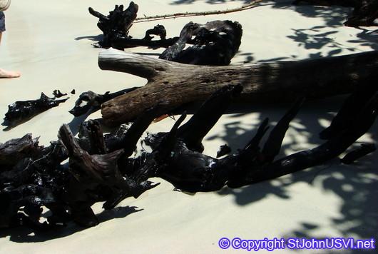 Driftwood @ Hawksnest Bay