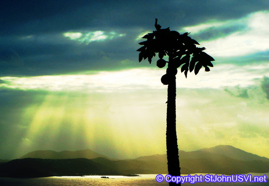 Palm tree cutting the view of Sun Rays over St Thomas
