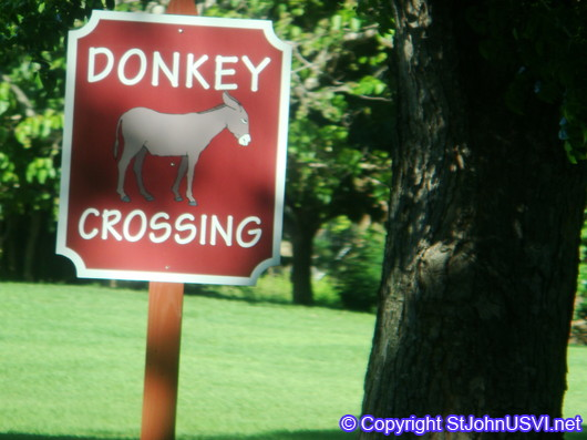 Donkey Crossing at Caneel Bay