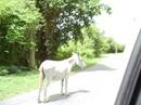 Donkey taking a walk
