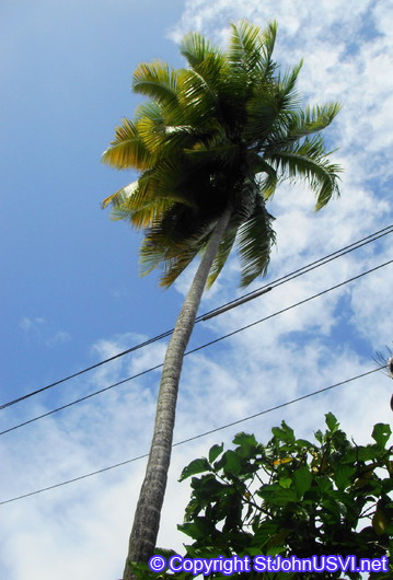 Nature mixing with industry; palm trees & power lines
