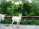 Roadside Donkeys