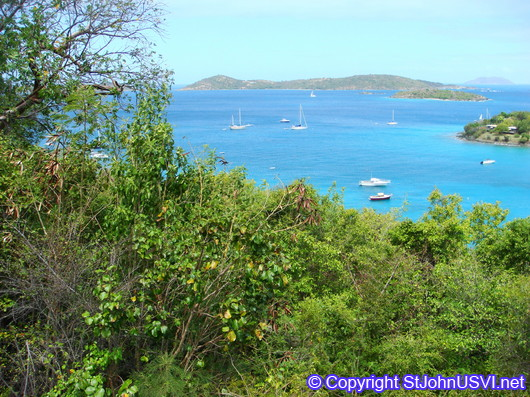 Looking out over Caneel Bay