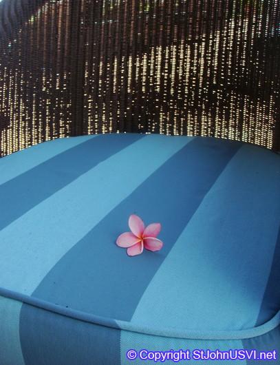 Plumeria (Frangipani) on a seat
