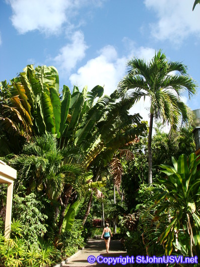 Canopy of various palms