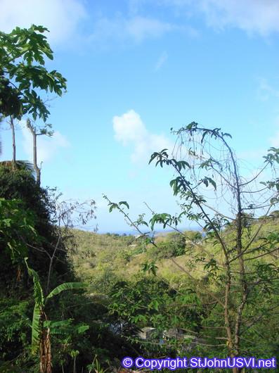 Tropical Vegetation